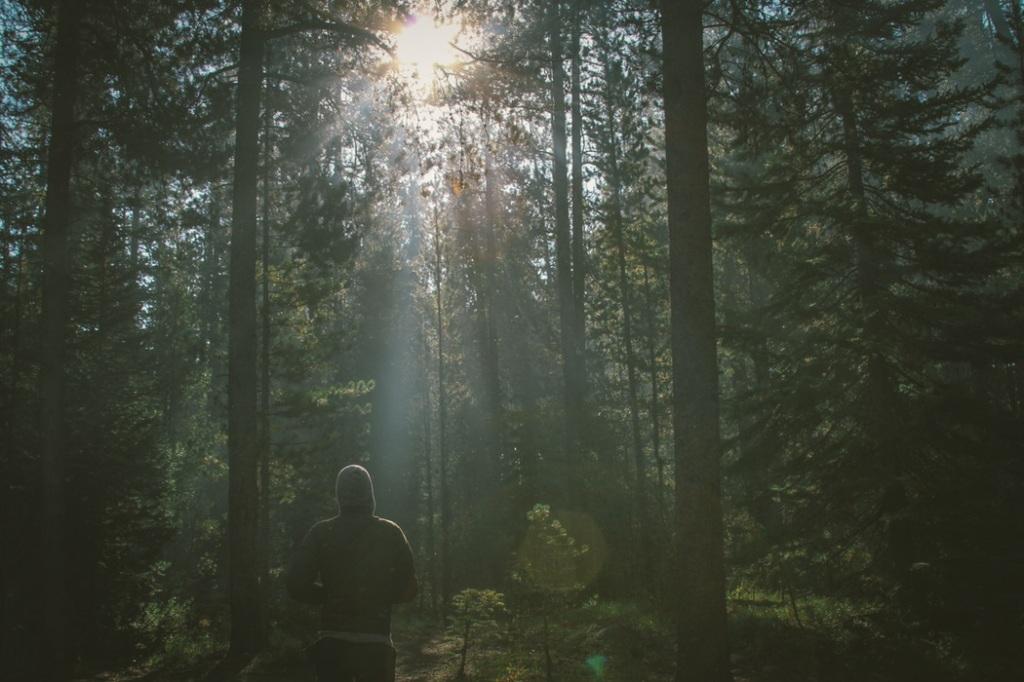 Forest by Dustin Scarpitti
